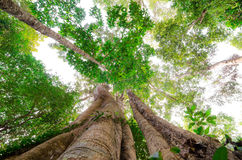 Árvore alta Fotos de Stock