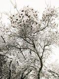 ?rvore coberta com a neve imagem de stock royalty free