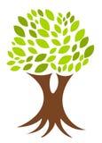 Árvore com raizes Fotos de Stock Royalty Free