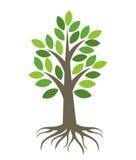 Árvore com raizes Imagem de Stock Royalty Free
