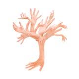 Árvore das mãos Foto de Stock