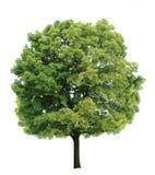 Árvore de bordo Fotografia de Stock Royalty Free