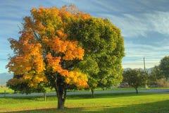 Árvore de bordo da queda do outono Foto de Stock Royalty Free