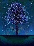 Árvore de florescência da noite Fotografia de Stock Royalty Free