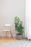 Árvore de limão em uma sala brilhante Fotos de Stock Royalty Free