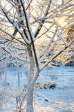 Árvore de maçã congelada Fotos de Stock