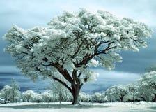 Árvore de vida Fotos de Stock Royalty Free