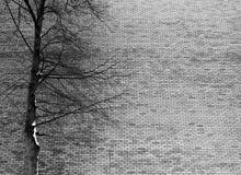 ?rvore desencapada na parte dianteira na parede de tijolo imagem de stock