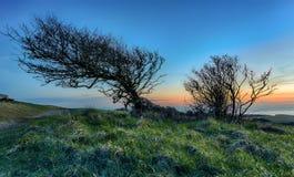 Árvore distorcida Foto de Stock Royalty Free