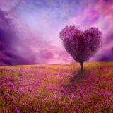 Árvore do amor Fotos de Stock Royalty Free