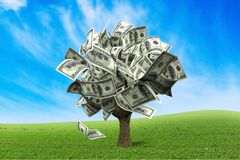 Árvore do dinheiro Imagens de Stock