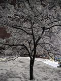 ?rvore do inverno foto de stock