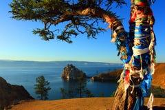 Árvore do Shaman Imagem de Stock