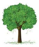 Árvore do verão da silhueta do vetor Imagem de Stock Royalty Free
