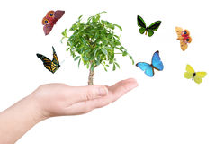 Árvore e borboleta Foto de Stock