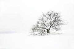 Árvore e campo do inverno Imagens de Stock