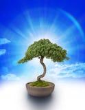 Árvore e céu dos bonsais Imagem de Stock