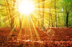 Árvore e madeiras de Sun Fotos de Stock