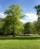 Árvore em um parque Fotos de Stock Royalty Free