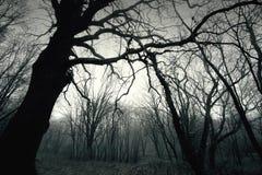 Árvore escura inoperante do inverno na floresta Foto de Stock