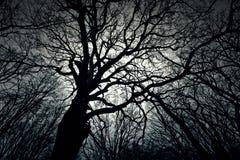 Árvore escura inoperante do inverno na floresta Imagens de Stock Royalty Free