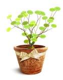 Árvore genealógica Fotografia de Stock