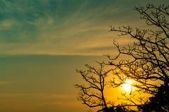 ?rvore inoperante da silhueta no por do sol ou no nascer do sol bonito no c?u dourado Fundo para o conceito calmo e tranquilo Luz fotografia de stock royalty free