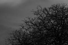 ?rvore Leafless Árvore inoperante da silhueta no fundo dramático escuro do céu e das nuvens para assustador ou a morte Fundo do d imagem de stock
