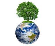 Árvore na terra Fotografia de Stock Royalty Free