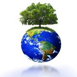 Árvore na terra Fotos de Stock Royalty Free