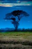 Árvore no crepúsculo Fotos de Stock Royalty Free