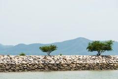 Árvore no quebra-mar formado por blocos de cimento Imagem de Stock Royalty Free