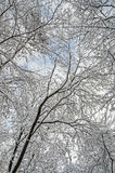 Árvore no tempo de inverno, ramos cobertos com a neve branca e gelo Fotografia de Stock