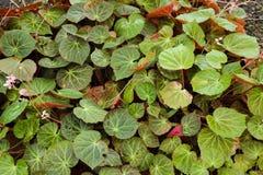 ?rvore, plantas, pedra da floresta e flores verdes bonitas nos jardins exteriores e nos parques p?blicos foto de stock royalty free