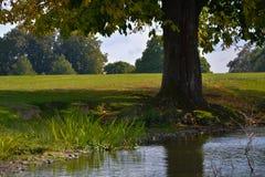 Árvore por um lago Fotos de Stock Royalty Free