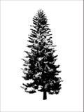 Árvore preta Imagem de Stock