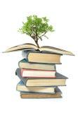Árvore que cresce do livro Fotografia de Stock