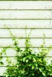 A árvore que escala na madeira almofada a parede Fotografia de Stock