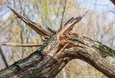 Árvore quebrada Fotos de Stock