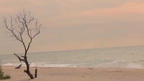?rvore seca pelo mar ?rvore apenas inoperante sem as folhas contra o mar filme