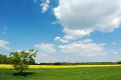 Árvore solitária em um campo Fotografia de Stock Royalty Free