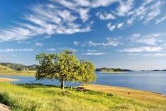 Árvore solitária sob a nuvem Imagem de Stock