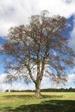 Árvore sozinho Foto de Stock