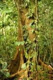 Árvore tropical Imagens de Stock