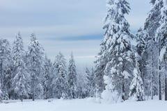 Árvores abaixo da neve Imagens de Stock Royalty Free