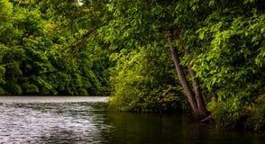 Árvores ao longo da costa do lago Marburg, no parque estadual de Codorus, Pe Imagem de Stock