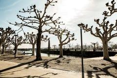?rvores aparadas originais nos bancos do lago foto de stock