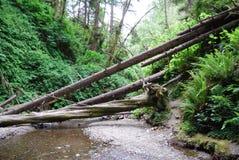 Árvores caídas Imagem de Stock
