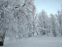 ?rvores cobertas com a neve no inverno imagens de stock