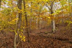 ?rvores coloridas do outono fotografia de stock royalty free